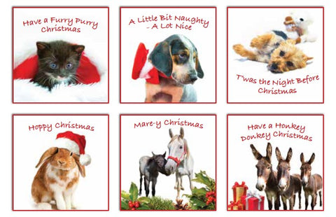 ISPCA Luxury Christmas Cards - 12 Cards (2020 Edition)