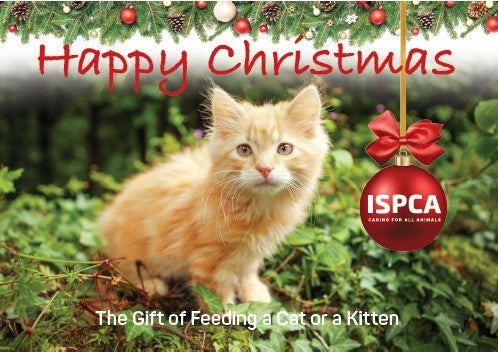 The Gift of Feeding a Cat or a Kitten this Christmas