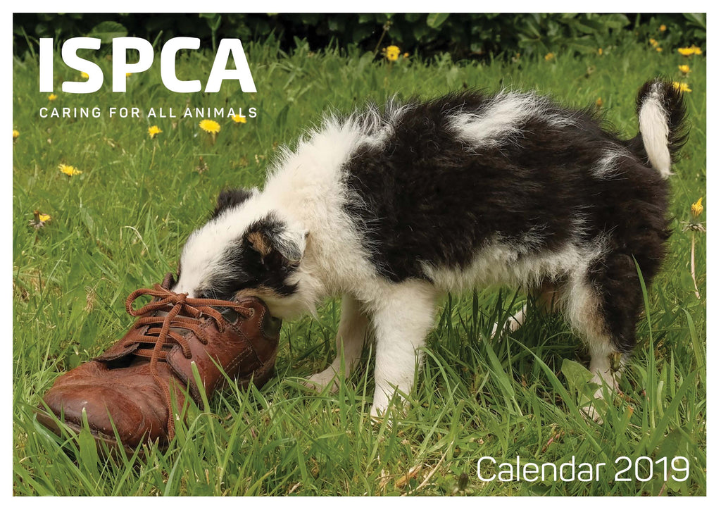 New! ISPCA Charity Calendar 2019