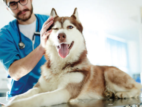 Clean Bill of Health for a Dog