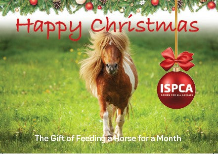 The Gift of Feeding a Horse for a Month