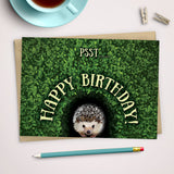 Hedgehog happy birthday card: hedgie in the hedge
