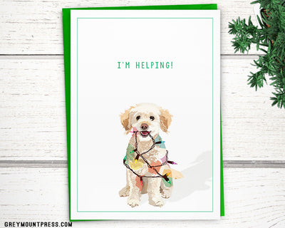 "Holiday: Mika the poodle-mix's ""I'm Helping!"" holiday card"