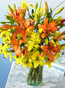 Asiatic Sunset Lilies