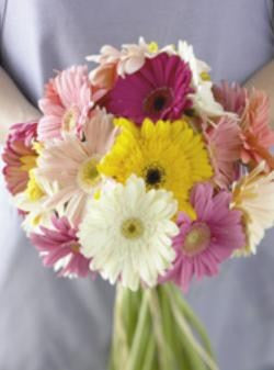 30 Stems Assorted Gerbera Bouquet