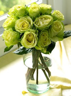One Dozen Chartreuse Roses