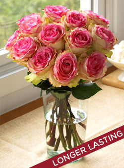 One Dozen Crown Majesty Roses