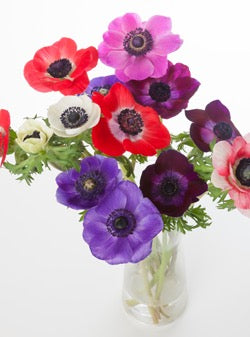Anemone Assorted Bouquet