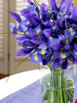 Blue Iris Bouquet with Free Vase