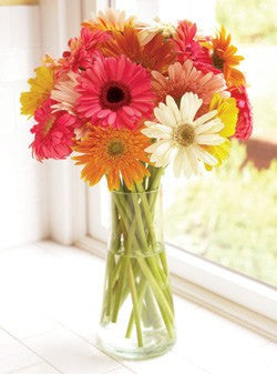 15 Sweet and Cheerful Gerbera Daisies
