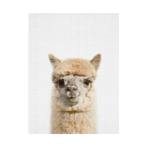 Alpaca Wall Art