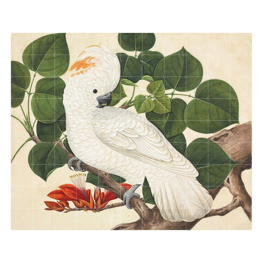 Cockatoo Wall Art