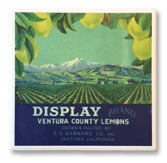 Ventura Lemon Label Coaster