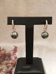 Tahitian South Sea Cultured Black Pearl Earrings (GE119)