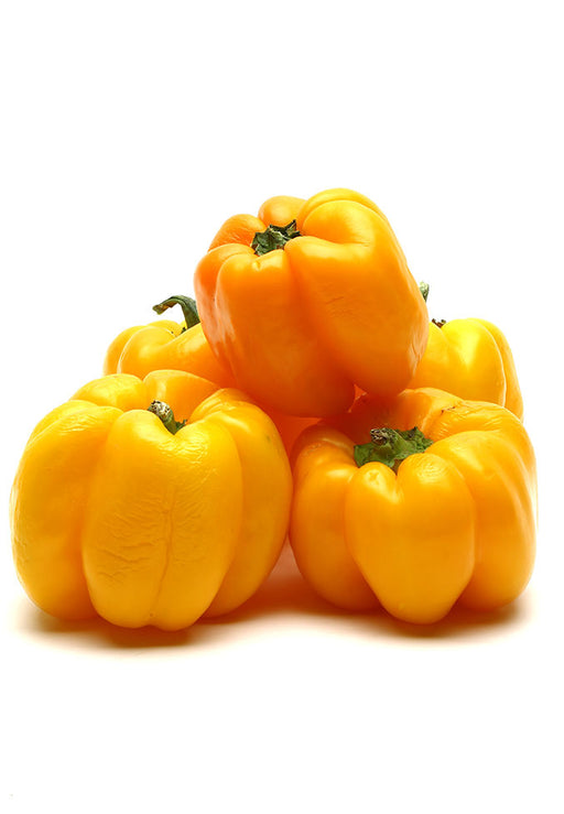 Capsicum Yellow Fresh / per kg