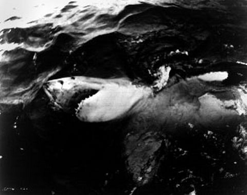 Jaws Classic Movie Scene Great White Shark Floating on the Sea Water Premium Art Print