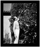 Fred Astaire Picking Fruit in Black and White High Quality Photo