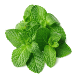 Mint Leaves 18 Vegetables
