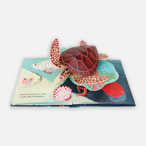 Shells Nautical Pop-Up Book