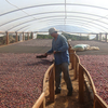 NICARAGUA: San Ignacio - Single Origin - Microlot SHG (Rainforest Alliance - RFA) - 100% Arabica