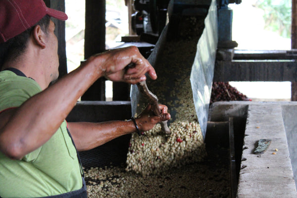 Decaf - COLOMBIA: El Cascabel - 100% Arabica -  Sugar Cane Process