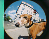 Lomography - Fisheye Baby 110 Basic [RENTAL]