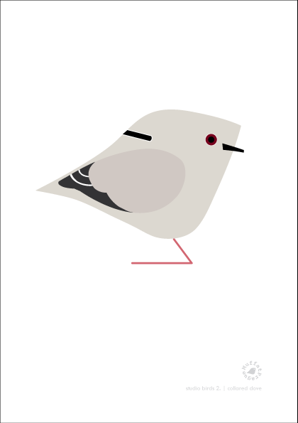 Collared Dove. Studio Birds | series 2.