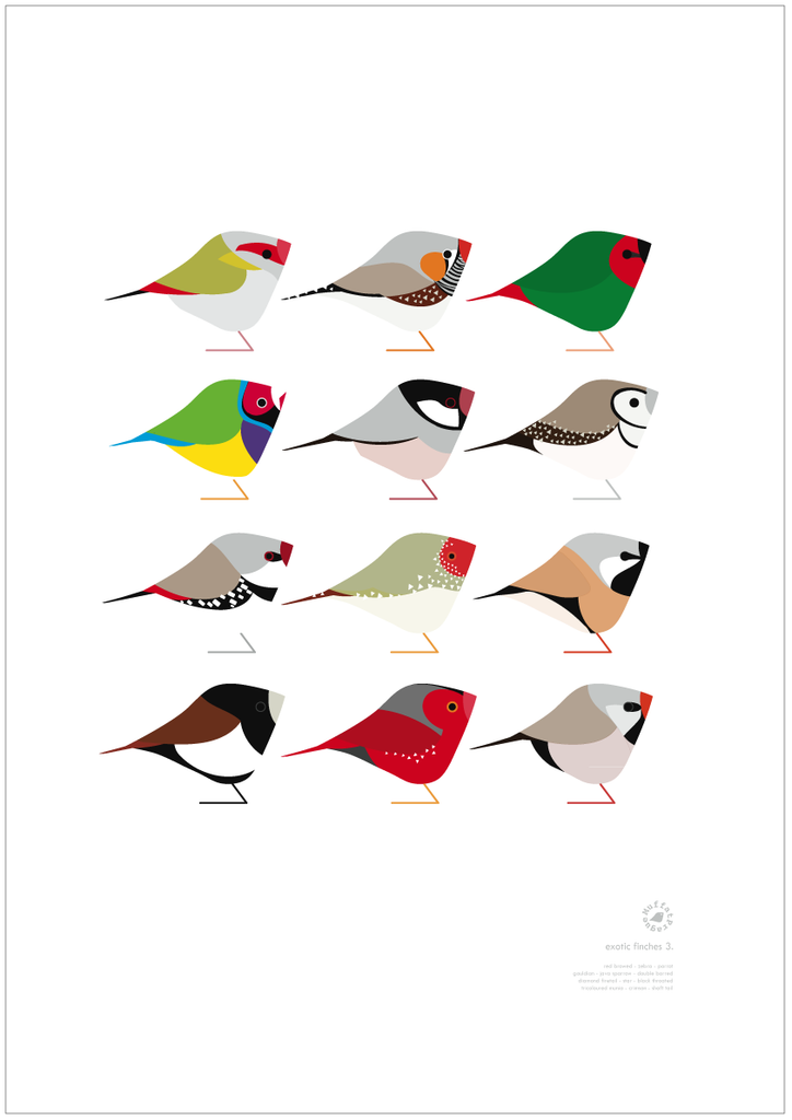 Exotic Finches | series 3.