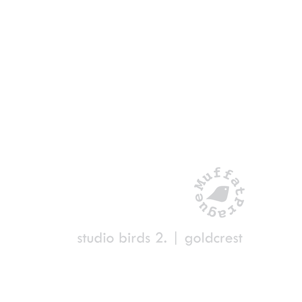 Goldcrest. Studio Birds | series 2.