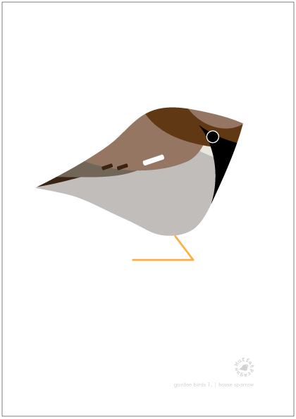 House Sparrow. Garden Birds | series 1.
