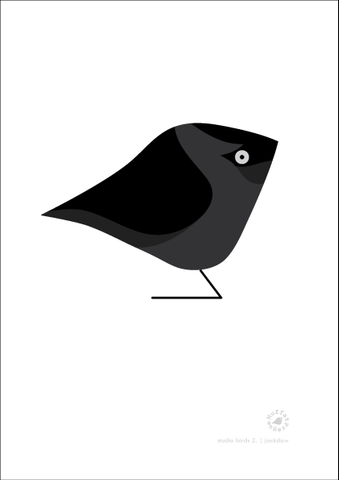 Jackdaw. Studio Birds | series 2.