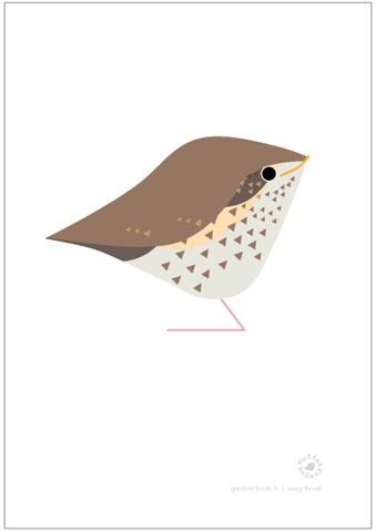 Song Thrush. Garden Birds | series 1.