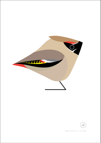 Waxwing. Studio Birds | series 2.