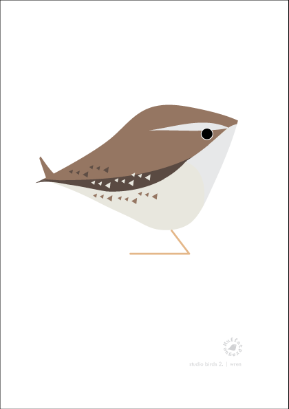 Wren. Studio Birds | series 2.