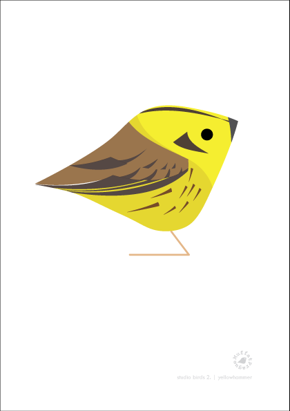 Yellowhammer. Studio Birds | series 2.