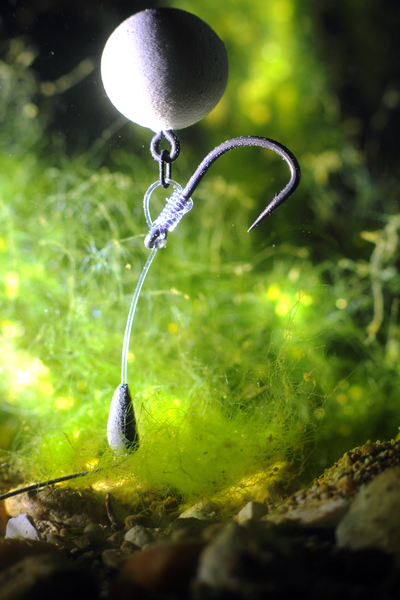 The reverse combi rig underwater, tied with our size 5 Duropoint chod hook