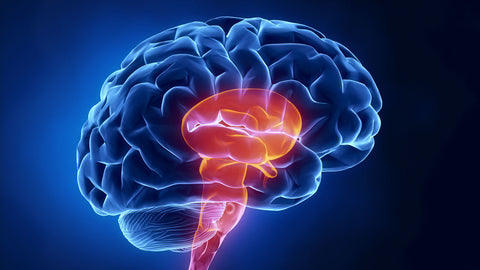 10 Dangerous Habits That Damage The Brain, Stop Doing These Immediately!
