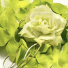 GREEN Flower Petal Set