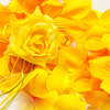 YELLOW Flower Petal Set