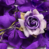 EGGPLANT PURPLE Flower Petal Set