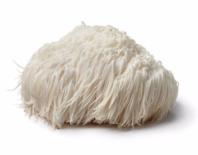 Where To Buy Lion's Mane Mushroom in Australia: Benefits, Side Effects & Uses | 2021