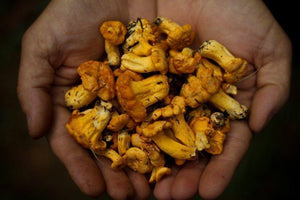 Medicinal Mushrooms: The Definitive Guide - Benefits, Types and How to Use Them.