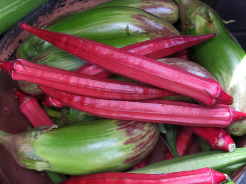Lady Finger Red (Bhindi) Seeds - OG - The Seed Store - 1