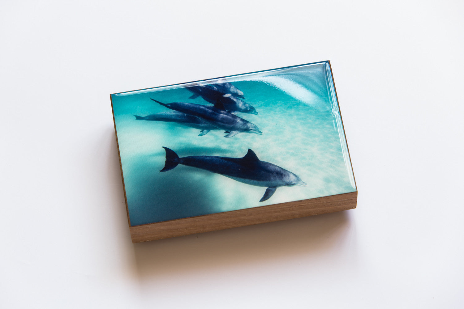 Tallow Beach Dolphins (200mm x 133mm)
