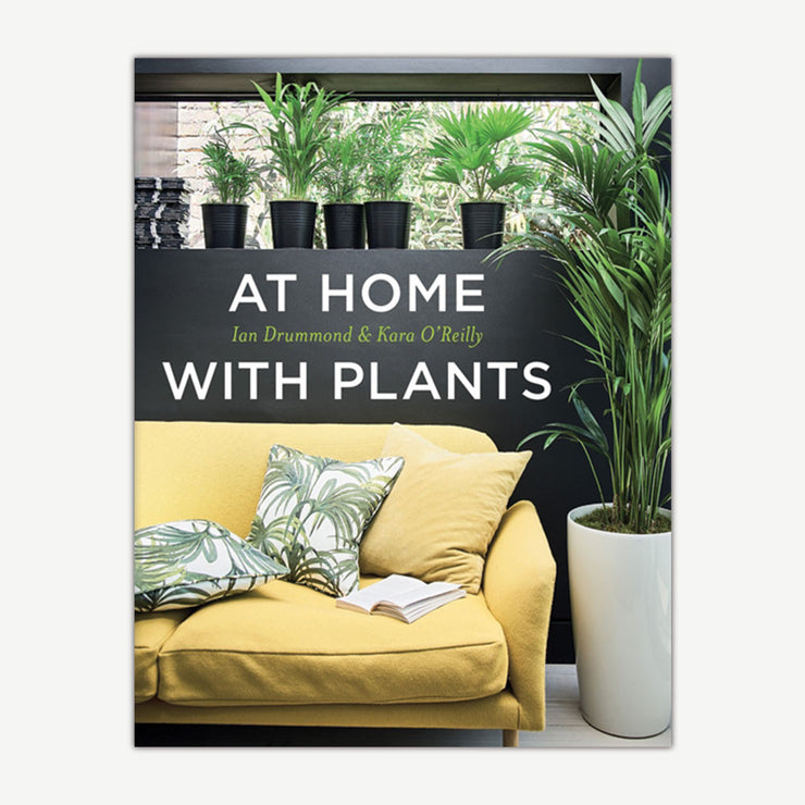 At Home With Plants - SCENE SHANG