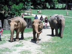 ENP - rescued and now safe elephants