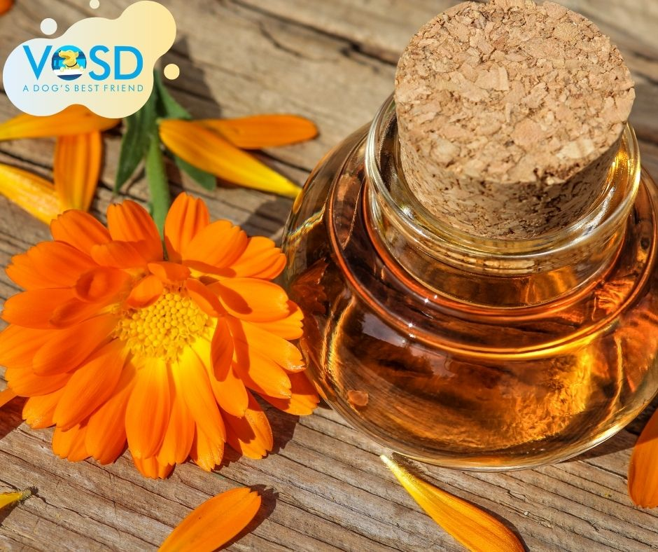 Benefits of Calendula for Dogs