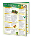 Wheat grass, juicing guide