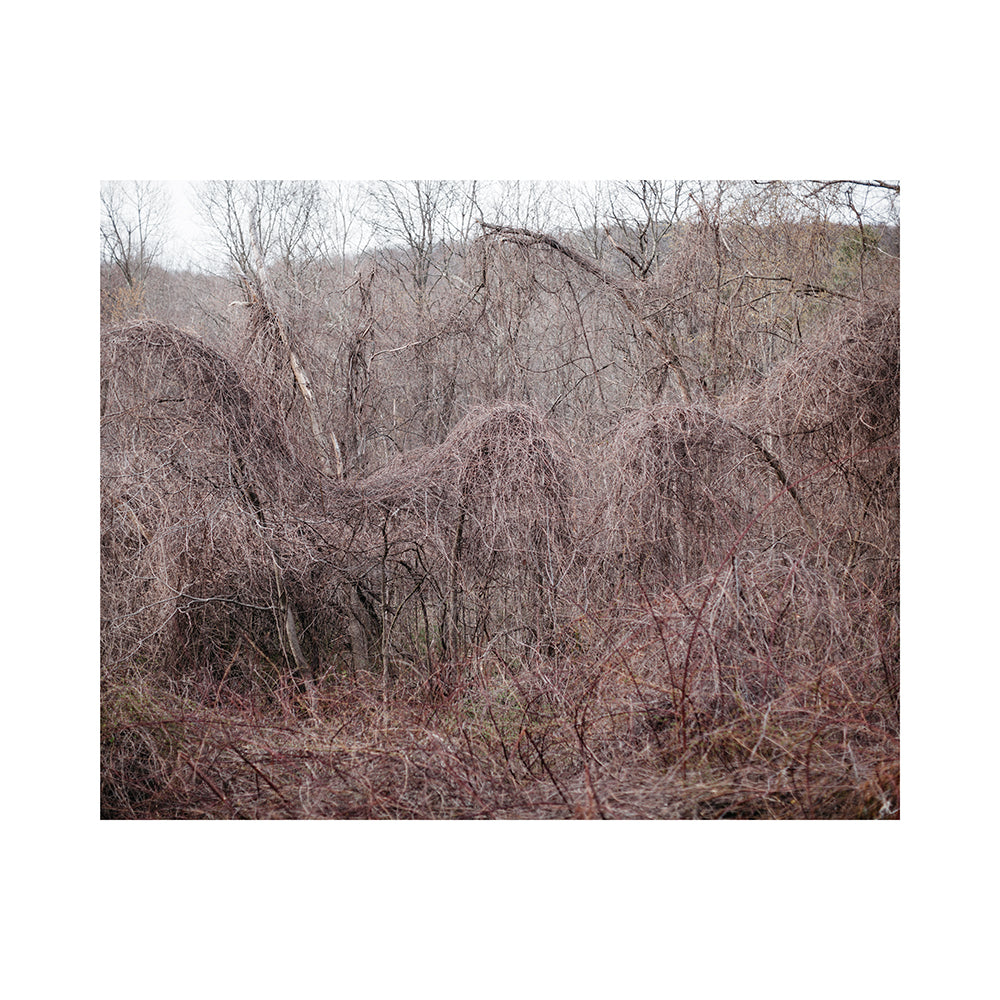 'Connecticut Bramble' by Rich Gilligan contemporary print from 60x60 collection