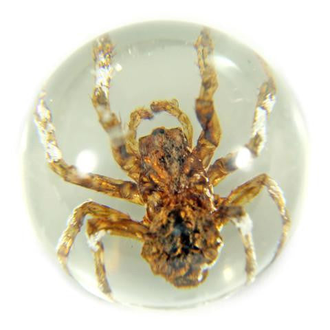 Real Bug - Marble Set - Scorpions and Spiders